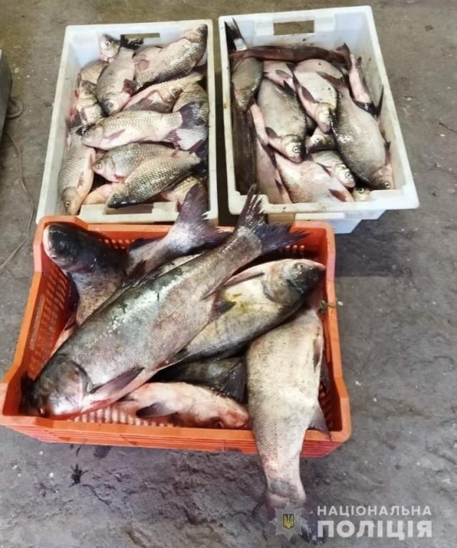 На Кіровоградщині більш ніж півтонни незаконно виловленої риби