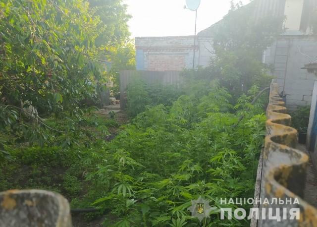 На Кіровоградщині поліцейські виявили та знищили плантацію маку і конопель