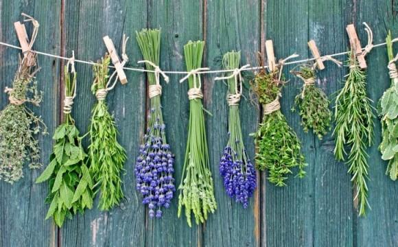Топ-10 лікарських трав, які заготовляють у липні